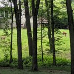 deer at the Ashgrove Lodge