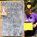 "Bean in front of chalkboard reading ""Coopers Hawk - daytime hunters - eat mice, birds, rabbits, frogs, snakes - have keen vision"""