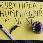 image of ruby throated hummingbird and nest