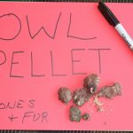 owl pellet, bones and fur