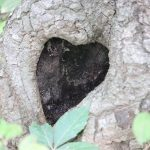 heart shaped tree hole