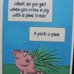 "picture of a pig with a joke ""what do you get when you cross a pig with a pine tree?"" ""a pork-o-pine"""