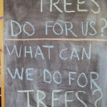 "chalkboard reads ""what do trees do for us? what can we do for trees?"""