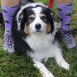 dog between pair of dog-themed knee socks